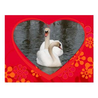 Cartão Postal cisnes dos namorados