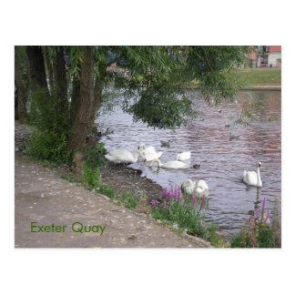 Cartão Postal Cisnes no cais de Exeter