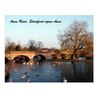 Cartão Postal Cisnes no rio Avon, Stratford-em cima-Avon
