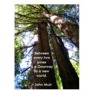 Cartão Postal Citações de Muir das árvores da sequóia vermelha