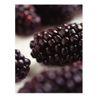 Cartão Postal Close up de Blackberry