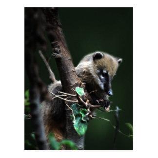 Cartão Postal Coati pequeno dos patifes - lemur