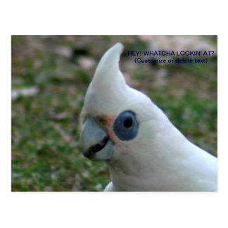 Cartão Postal Cockatoo Eyed azul
