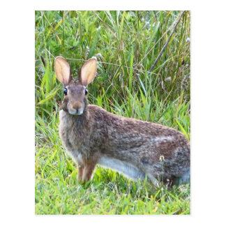 Cartão Postal coelho