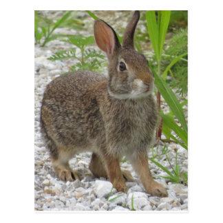 Cartão Postal Coelho de coelho