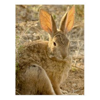 Cartão Postal Coelho de coelho do deserto