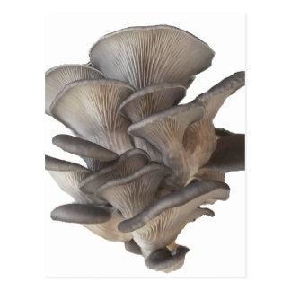 Cartão Postal Cogumelo de ostra