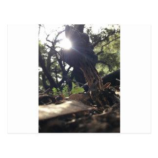 Cartão Postal Cogumelo Elfin da sela