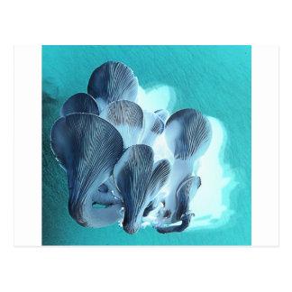 Cartão Postal Cogumelos de ostra no azul