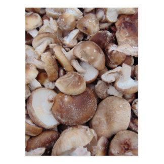 Cartão Postal Cogumelos de Shiitake