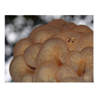 Cartão Postal Cogumelos selvagens