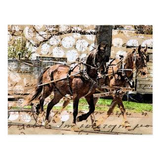 Cartão Postal Colagem de dois meios mistos da equipe do cavalo