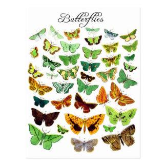 Cartão Postal Coleção verde da borboleta