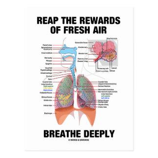 Cartão Postal Colha as recompensas do ar fresco respiram