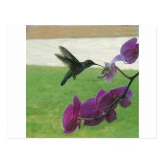 Cartão Postal Colibri com orquídea
