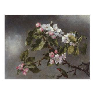 Cartão Postal Colibri e flores Martin J. Heade de Apple