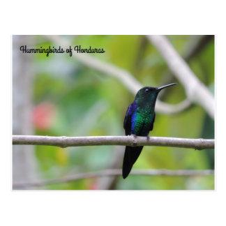 Cartão Postal Colibris de Honduras