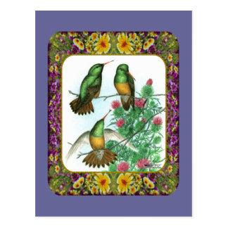 Cartão Postal Colibris e flores #1