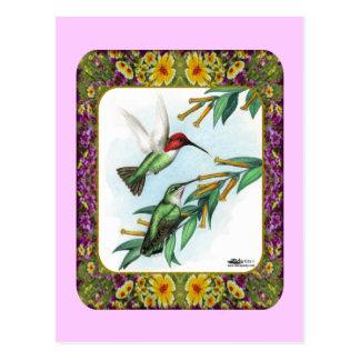 Cartão Postal Colibris e flores #4