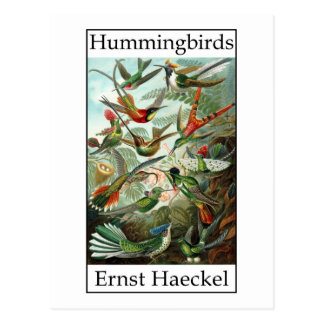 Cartão Postal Colibris por Ernst Haeckel