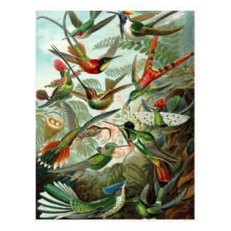 Cartão Postal Colibris por Ernst Haeckel, árvores dos pássaros