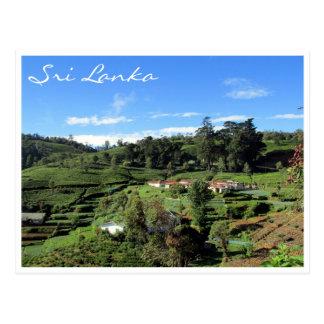 Cartão Postal colinas do chá