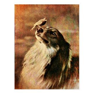 Cartão Postal Collie e passarinho