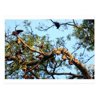 Cartão Postal Colônia do megabat de raposa de vôo nas árvores