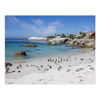 Cartão Postal Colônia do pinguim na praia dos pedregulhos,