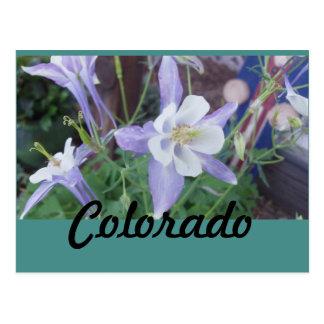 Cartão Postal Colorado aquilégia azul