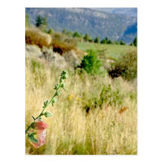Cartão Postal Colorado setembro