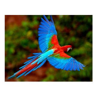 Cartão Postal Colorful Scarlet Macaw em flight