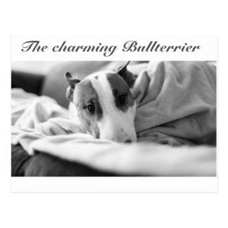 Cartão postal com Bullterriermotiv