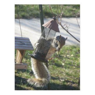 Cartão Postal Comendo o esquilo