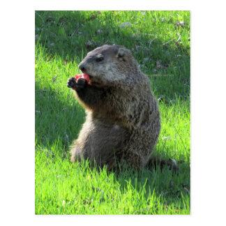 Cartão Postal Comer de Groundhog