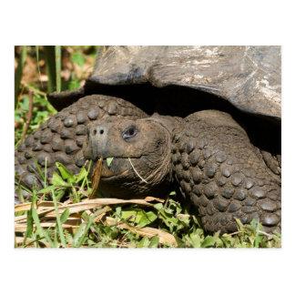 Cartão Postal Comer | Galápagos da tartaruga gigante