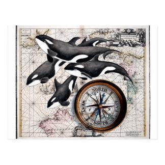 Cartão Postal Compasso náutico da orca