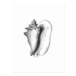 Cartão Postal Conch da rainha (linha arte)