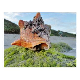 Cartão Postal Conch Shell na praia