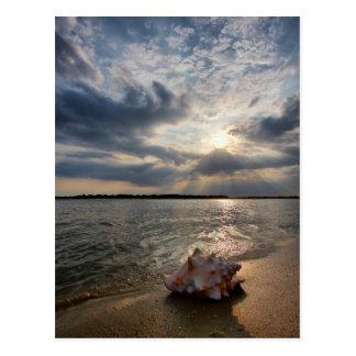 Cartão Postal Conch Shell na praia | St Augustine, Fl