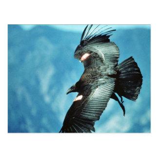 Cartão Postal Condor de Califórnia
