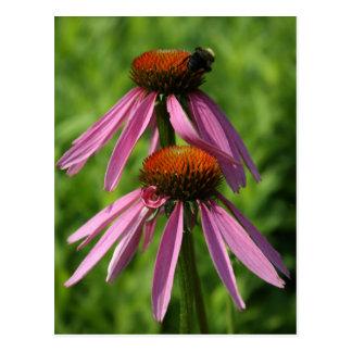 Cartão Postal Coneflower e abelha
