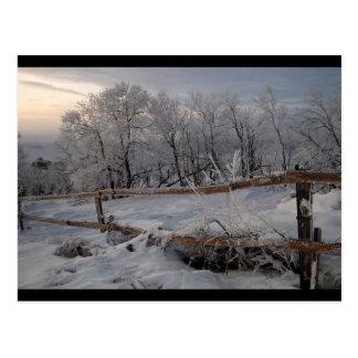 Cartão Postal Congelado para o norte