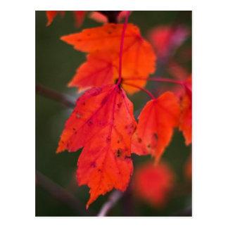 Cartão Postal Cor atrasada do outono