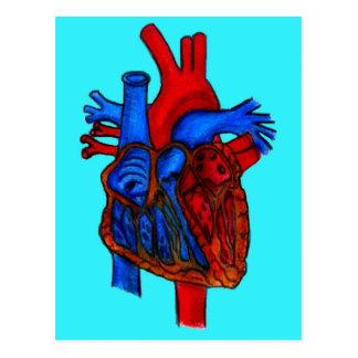 Cartão Postal Coração anatômico tirado mão do Aqua