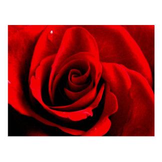 Cartão Postal Coração de um rosa