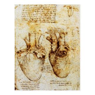 Cartão Postal Coração e seu pergaminho dos vasos sanguíneos