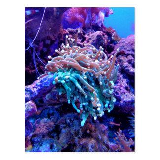 Cartão Postal coral-1053837