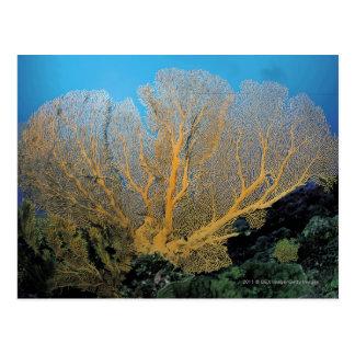 Cartão Postal Coral de Gorgonian