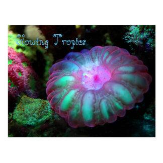 Cartão Postal Coral submarino de incandescência